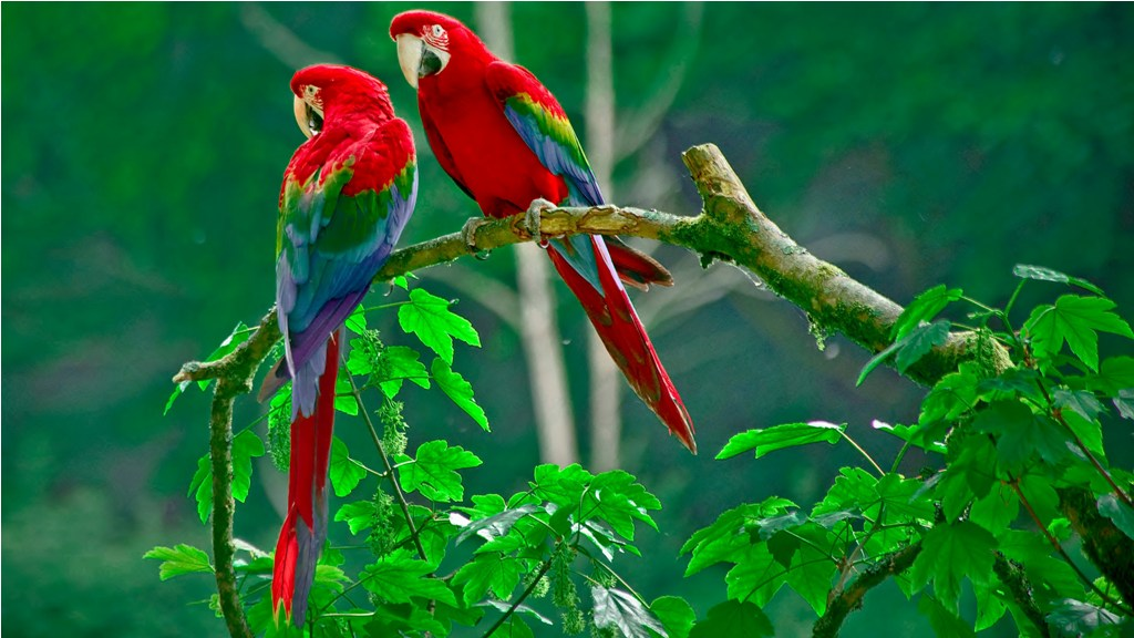Colorful Parrot Images