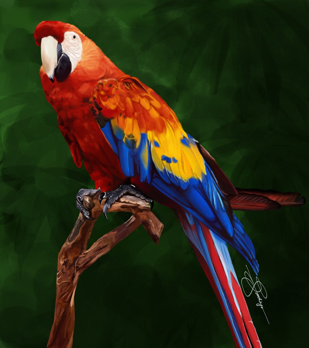 Beautiful Colorful Living Rooms: 35 Beautiful & Colorful Parrots Wallpaper